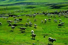 Moutons sur la montagne Photos stock