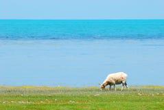 Moutons sur la montagne Photographie stock