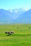 Moutons sur la montagne Photographie stock libre de droits