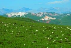 Moutons sur la montagne colorée Photo libre de droits