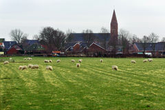 Moutons sur la pelouse vis-à-vis des maisons et de l'église de village Images stock