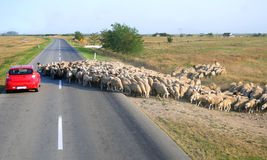 Moutons sur la route Photos stock