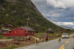 Moutons sur la route Images libres de droits