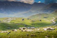 Moutons sur le pré de montagnes images stock