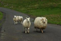 Moutons sur une route dans les vallées de Yorkshire Photographie stock
