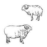 Moutons tirés par la main Image libre de droits