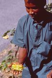 Moutsamoudou/Grandes Comores: Die Anlage Ylang Ylang ist das Essen lizenzfreie stockfotos