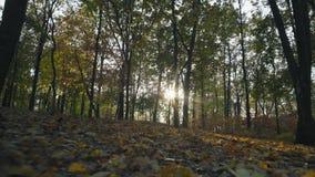 Mouvement, Autumn Forest en Sunny Weather Guttered par le feuillage de chute banque de vidéos