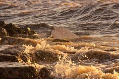 mouvement congelé instantané de moyens éclaboussant l'eau Image stock
