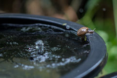 Mouvement d'escargot Photos stock
