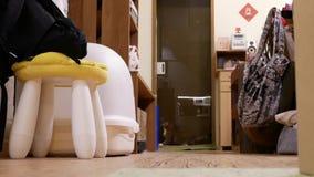 Mouvement de chat tigré jouant la tache rouge avec des personnes à la maison banque de vidéos