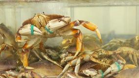 Mouvement des crabes vivants dans le réservoir banque de vidéos