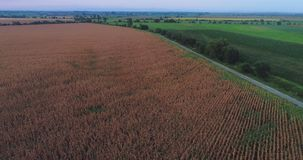 Mouvement lent aérien d'inclinaison au-dessus des champs secs de ferme dans le coucher du soleil avec la petite route banque de vidéos
