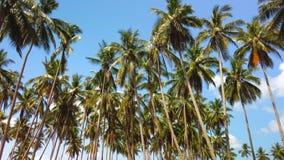 Mouvement lent des arbres de noix de coco grands avec le nuage blanc et les cieux bleus banque de vidéos