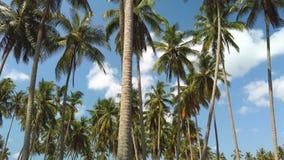 Mouvement lent des arbres de noix de coco grands avec le nuage blanc et les cieux bleus clips vidéos