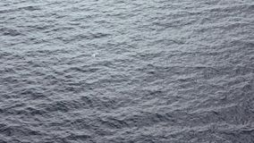 Mouvement lent La vue supérieure des mouettes communes volant sur le méditerranéen voient clips vidéos
