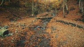 Mouvement sauvage de crique de nature de paysage en bois d'automne banque de vidéos