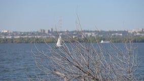 Mouvement sec de branches d'arbre et de bateau à voile loin banque de vidéos
