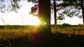 Mouvements de glisseur de caméra par la fin de tronc d'arbre  Les rayons du soleil brillent par les arbres au coucher du soleil clips vidéos
