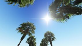 Mova a parte superior da palma de coco no céu azul filme