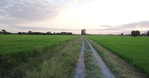 Move along footpath beside two paddy fields stock footage