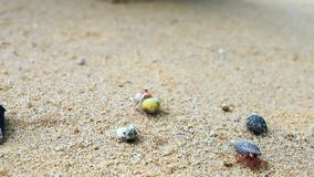 on hermit crab movement on the beach stock video footage