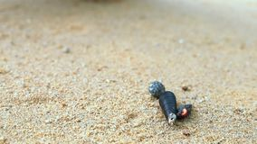 on hermit crab movement on the beach stock footage