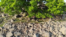 Oak on the top of a mountain - Macin Mountains - Romania. Move-lift over an oak and over the top of some mountains Macin - Romania. Spring. Clear day. Sunset stock video footage