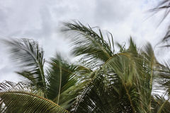 Move motion. Branch coconut trees gently sway in the wind Stock Photos