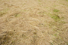 Moved Grass. (in the park Stock Photo