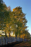 Moved leaves on fall. Moved tree leaves and wooden fence on fall. Cluj countryside Royalty Free Stock Photography
