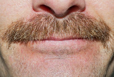 Movember mustasch Royaltyfri Bild