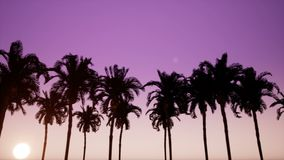 Movement along the alley of palm trees. In the background of the dawn stock video footage