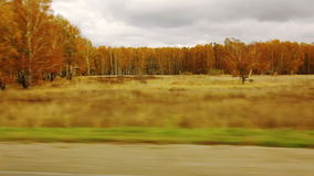 Movement along the Forest in autumn (POV) Stock Images
