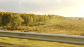 Movement along the forest in the evening (POV) Royalty Free Stock Photo