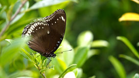 Movement of Brown Butterfly. In The Tree Stock Photos