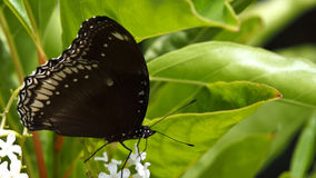 Movement of Brown Butterfly. In The Tree Stock Images