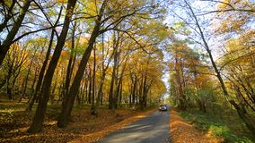 Movement of the car to the camera. Autumn park with colorful beautiful trees, autumn yellow leaves on a sunny day. Movement of the car to the camera. Autumn stock video footage