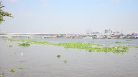 Movement of Chao phraya river. At Nonthaburi, Thailand stock video footage