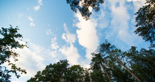 The movement of clouds in the sky during the day in the forest stock video