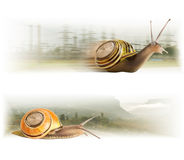 Movement cute snails Royalty Free Stock Photography