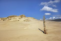 Movement dunes - Leba, Poland, National Unesco Park. Stock Photos