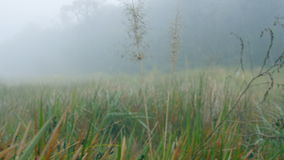 Movement through grass in misty, rainy forest. Dense fog in woods stock video