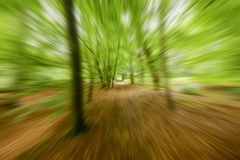 Movement of perspective in the woods. Movement of perspective in the forest with fresh green leaves in spring Stock Photos