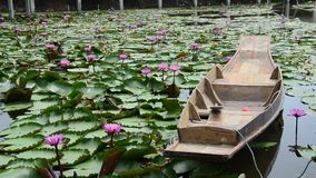 Movement of pink red lotus and motion of wooden boat floating on pond stock video