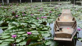 Movement of pink red lotus and motion of wooden boat floating on pond stock video footage