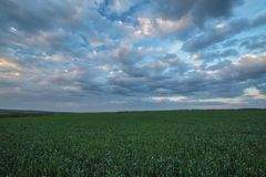 The movement of the thunderclouds over the fields of winter whea. Russia. The movement of the thunderclouds over the fields of winter wheat in early spring in Royalty Free Stock Photos