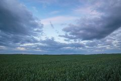 The movement of the thunderclouds over the fields of winter whea. Russia. The movement of the thunderclouds over the fields of winter wheat in early spring in Royalty Free Stock Photo