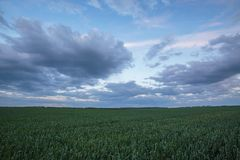 The movement of the thunderclouds over the fields of winter whea. Russia. The movement of the thunderclouds over the fields of winter wheat in early spring in Royalty Free Stock Images