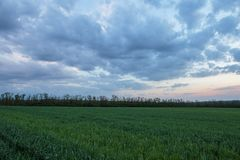 The movement of the thunderclouds over the fields of winter whea. Russia. The movement of the thunderclouds over the fields of winter wheat in early spring in stock photos